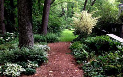 Лесной сад