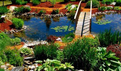 Растения подходящие для искусственного водоема