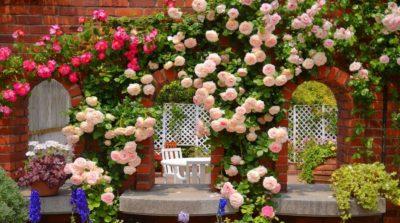 Дизайн участка — использование роз и хвойных растений