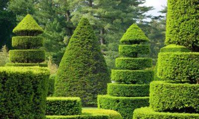 Топиарные сады – ожившие скульптуры на Вашем дворе